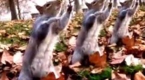 Squirrels Dancing to Michael Jackson – The best use of the internet to date?